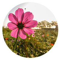 circle-flowers