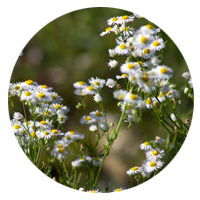 circle-small-flowers
